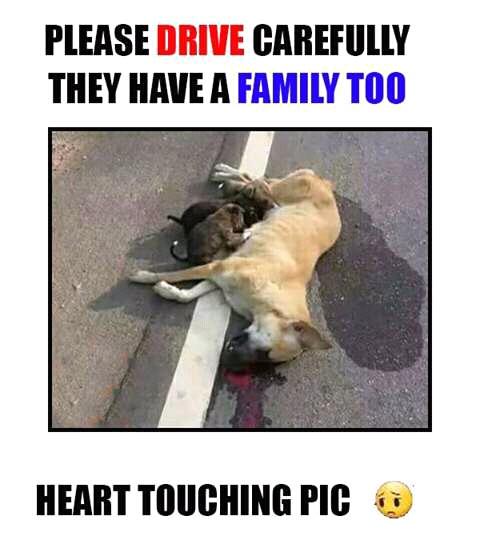 Save the dog by Salaria boy