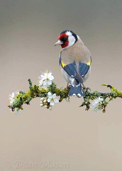 Keep Save the birds